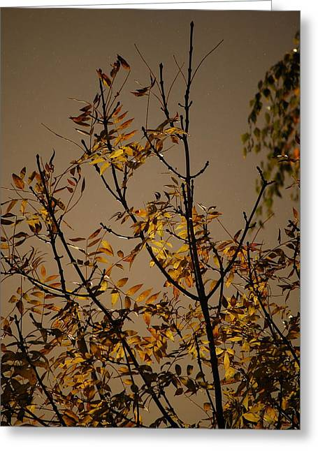 Autumn Trees II Greeting Card by Dickon Thompson