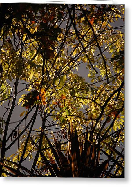 Autumn Trees IIi Greeting Card by Dickon Thompson