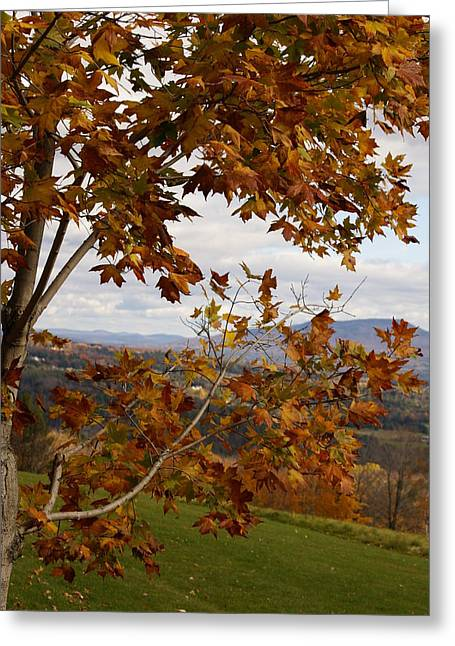 Autumn Trees Greeting Card by Margaret Steinmeyer