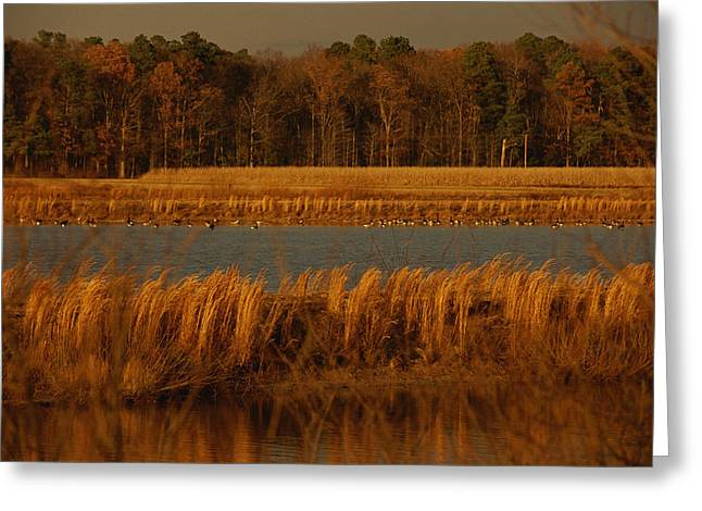 Autumn View Of Canada Geese Greeting Card