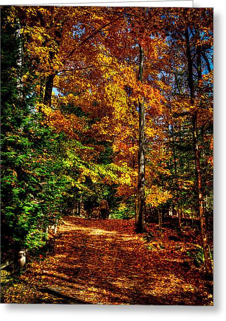 Autumn Walk Greeting Card by David Patterson