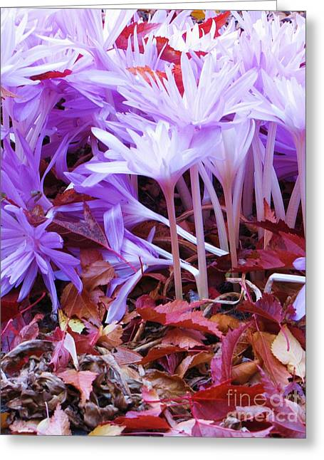 Greeting Card featuring the photograph Autumn Water Lily Crocus by Michele Penner