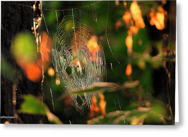 Autumn Web Greeting Card by Sarai Rachel