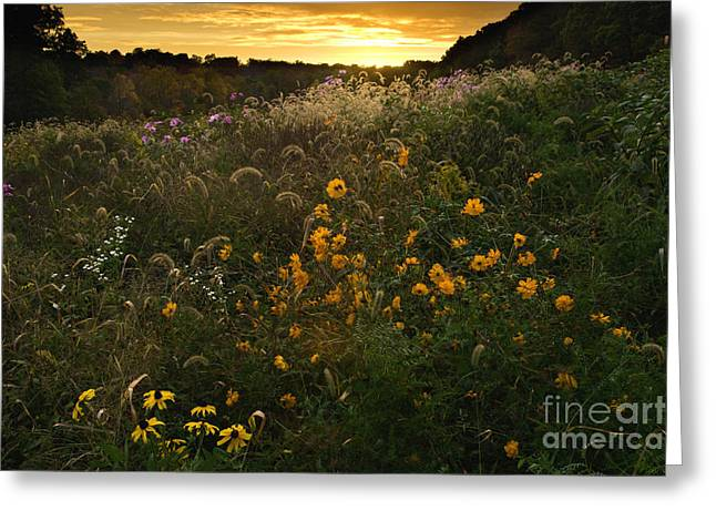 Autumn Wildflower Sunset - D007757 Greeting Card by Daniel Dempster