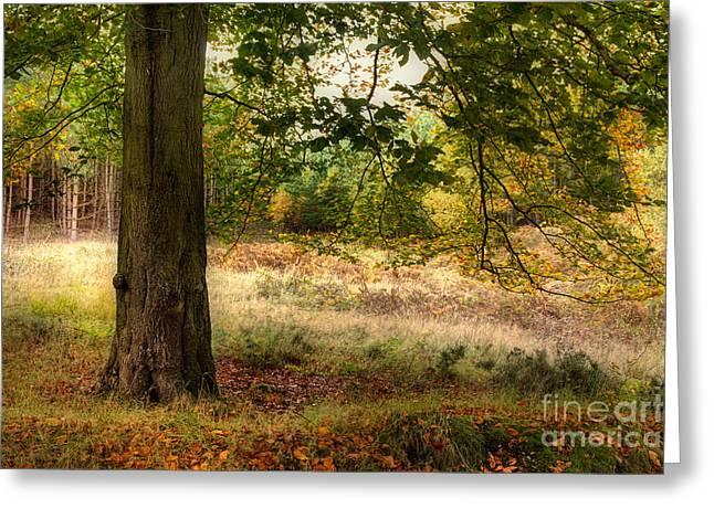 Autumn Woodland Greeting Card by Ann Garrett