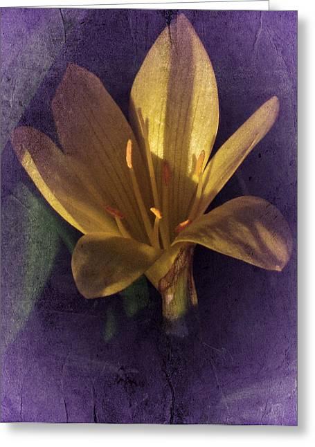 Autumn Yellow Crocus Greeting Card