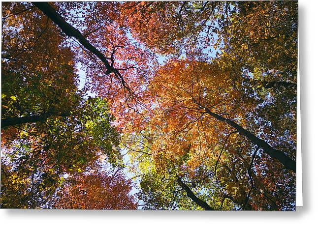 Autumnal Canopy Greeting Card