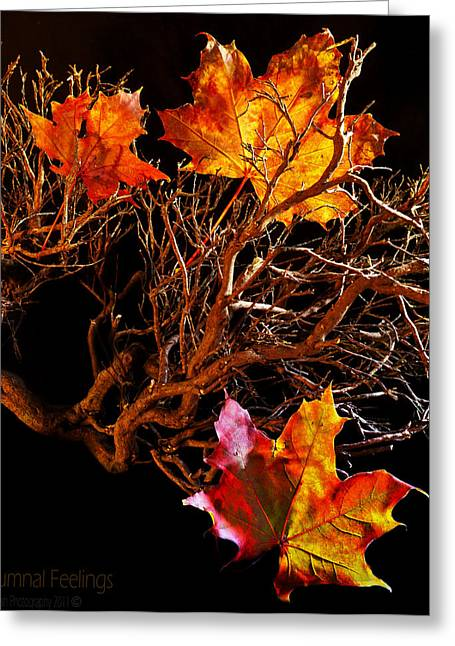 Greeting Card featuring the photograph Autumnal Feelings by Beverly Cash