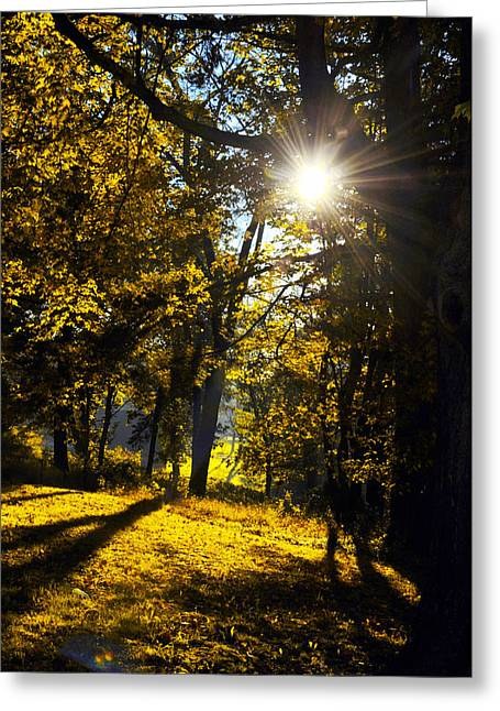 Autumnal Morning Greeting Card by Bill Cannon