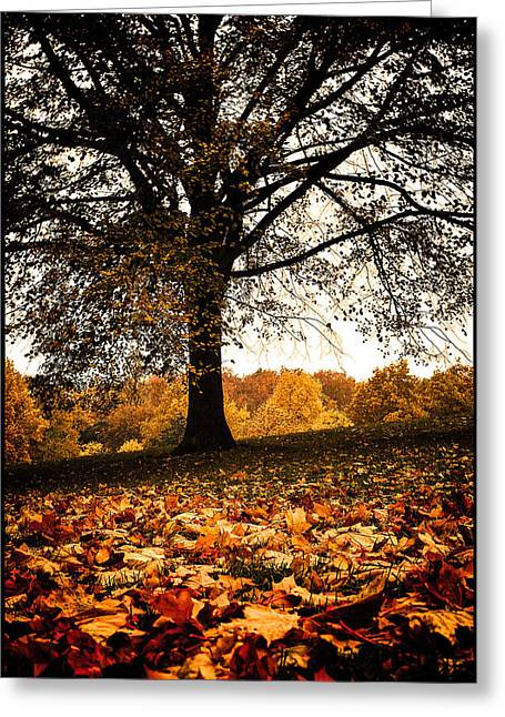 Autumnal Park Greeting Card by Lenny Carter