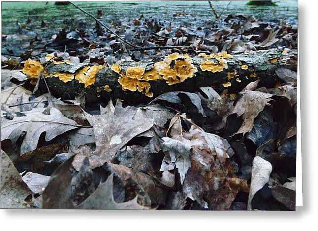 Greeting Card featuring the photograph Autumns Art 3 by Gerald Strine