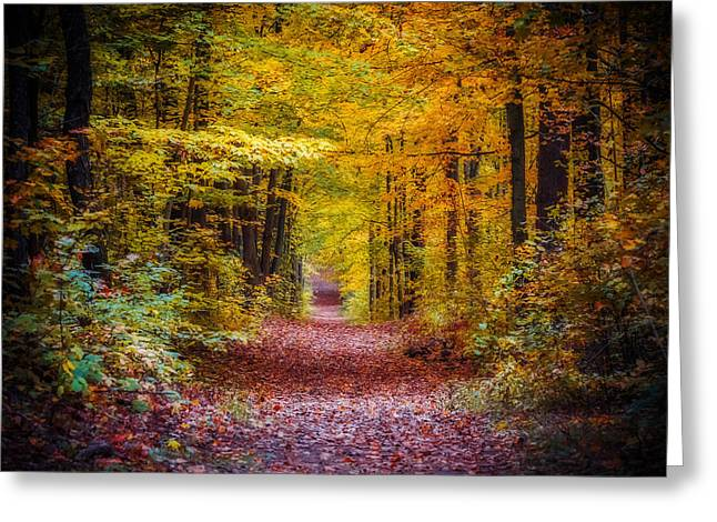 Autumns Canopy Greeting Card