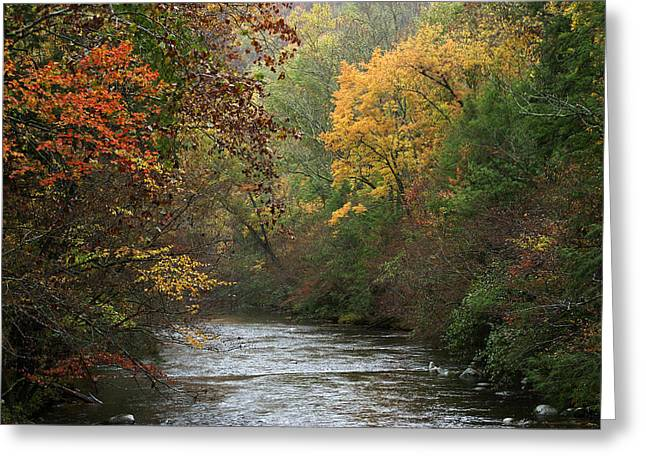 Autumn's Splendor Greeting Card by TnBackroadsPhotos