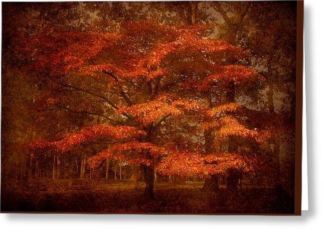 Autumn's Tradition - Ocean County Park Greeting Card by Angie Tirado