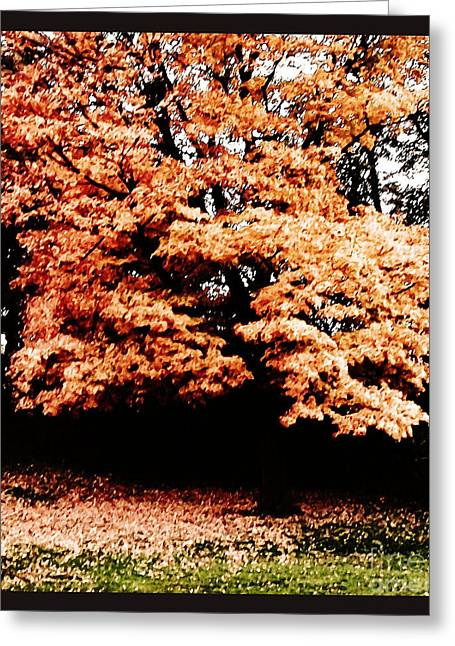 Autumns Tree Greeting Card by Marsha Heiken