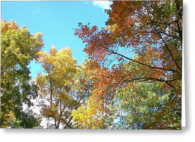 Greeting Card featuring the photograph Autumn's Vibrant Image by Pamela Hyde Wilson
