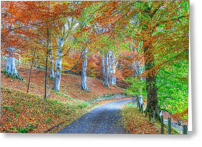 Autumns Way Vert Greeting Card by John Kelly