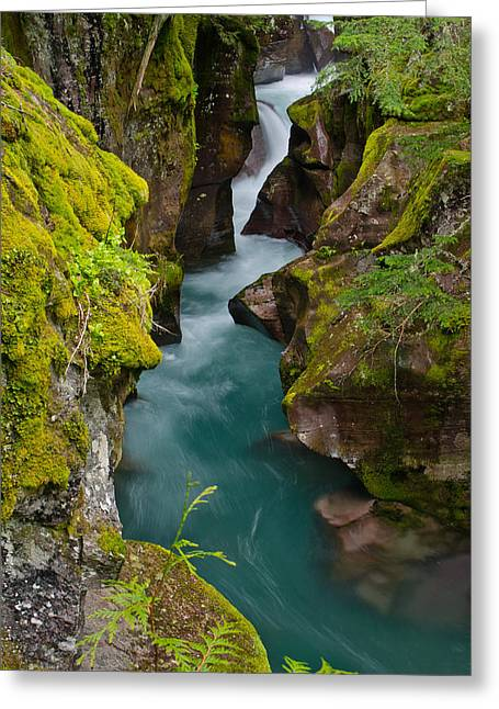 Avalanche Gorge Greeting Card by Greg Nyquist
