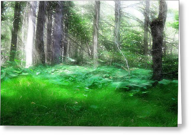 Greeting Card featuring the photograph Avalon Forest Dreamscape by Mario Carini