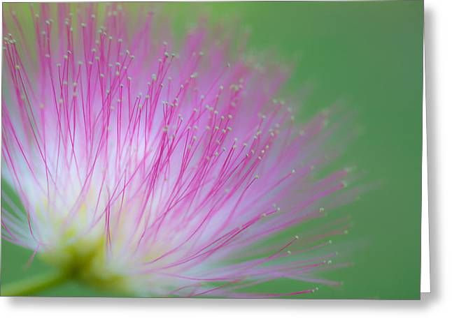 Awesome Blossom Greeting Card by Dorothy Cunningham