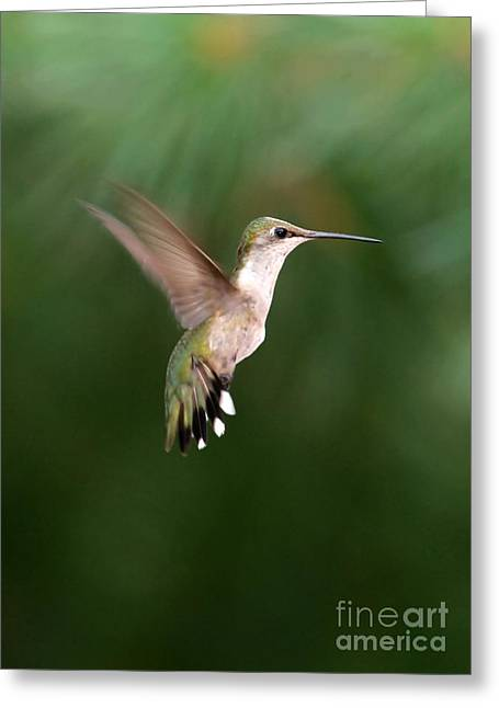 Awesome Hummingbird Greeting Card by Sabrina L Ryan