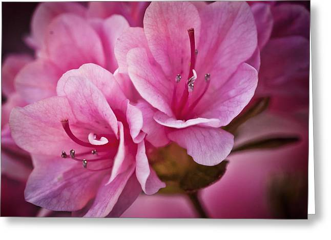 Azalea Fission One Greeting Card by Michael Putnam