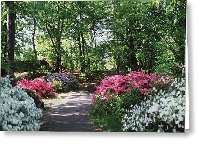 Azalea Path Greeting Card by Elizabeth Coats