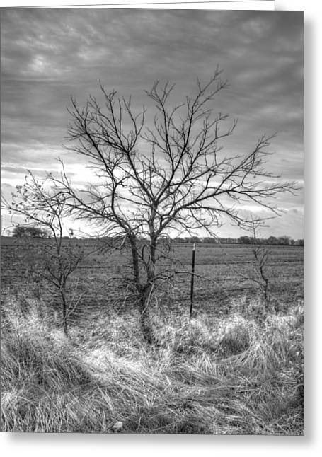 B/w Tree In The Country Greeting Card