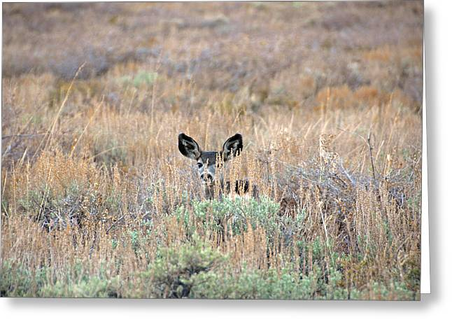 Greeting Card featuring the photograph Babe In Hiding by Lynn Bauer