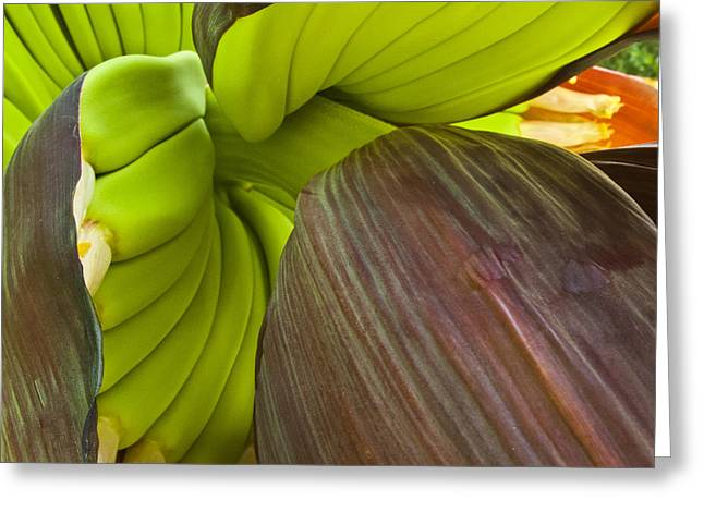 Baby Bananas Greeting Card by Heiko Koehrer-Wagner