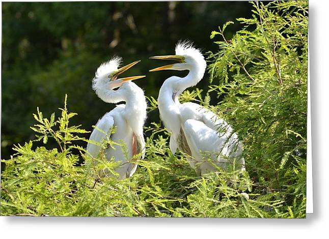 Baby Egrets Chattering Greeting Card