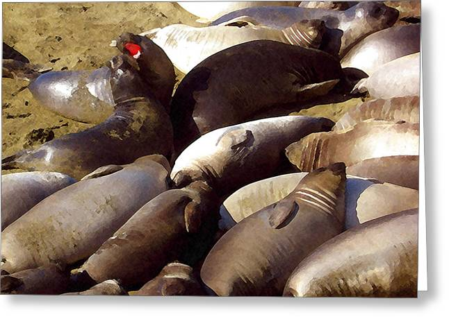 Baby Elephant Seals Greeting Card by Timothy Bulone