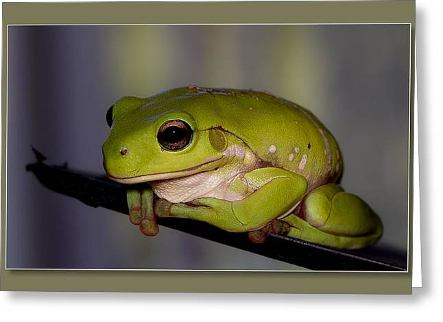 Greeting Card featuring the digital art Baby Frog by Kevin Chippindall