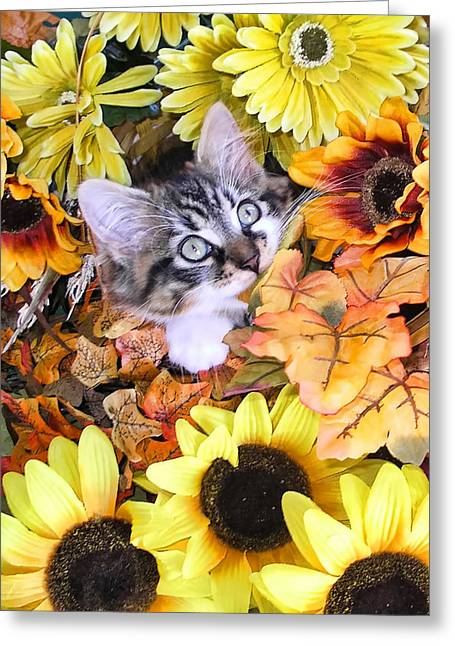 Baby Kitty Cat Munching Fall Leaves - Cute Kitten In Autumn Colors With Sunflowers - Fall Time Greeting Card by Chantal PhotoPix