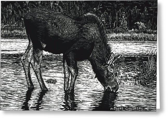 Baby Moose Grazing Greeting Card by Robert Goudreau