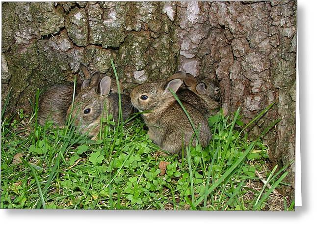 Baby Rabbits Greeting Card