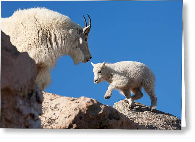 Greeting Card featuring the photograph Baby Steps by Jim Garrison