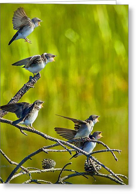 Baby Tree Swallows Feeding #1 Greeting Card