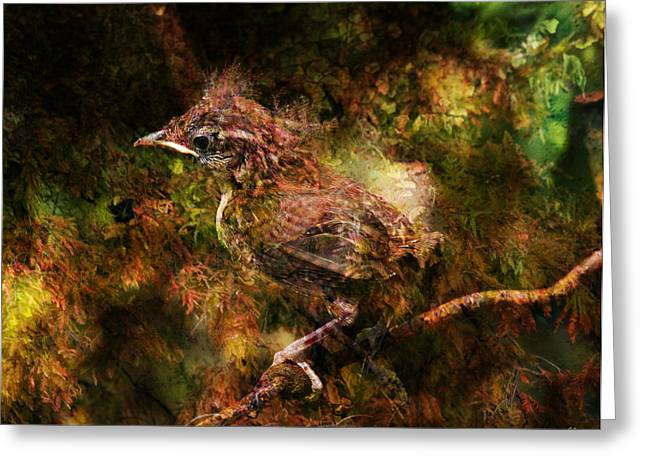 Baby Wren First Fly Greeting Card by J Larry Walker