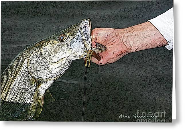 Back Bay Snook Greeting Card by Alex Suescun