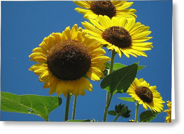 Greeting Card featuring the photograph Back Bay Sunflowers by Bruce Carpenter