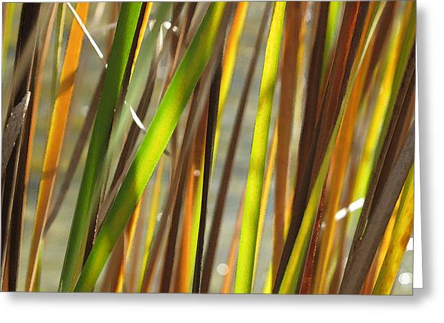 Backlit Grass Wc 2  Greeting Card by Lyle Crump