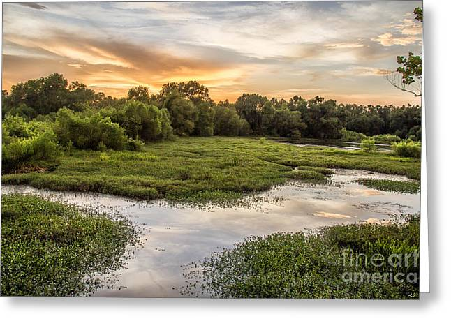Backwaters Sunset Greeting Card by Joey Wilder