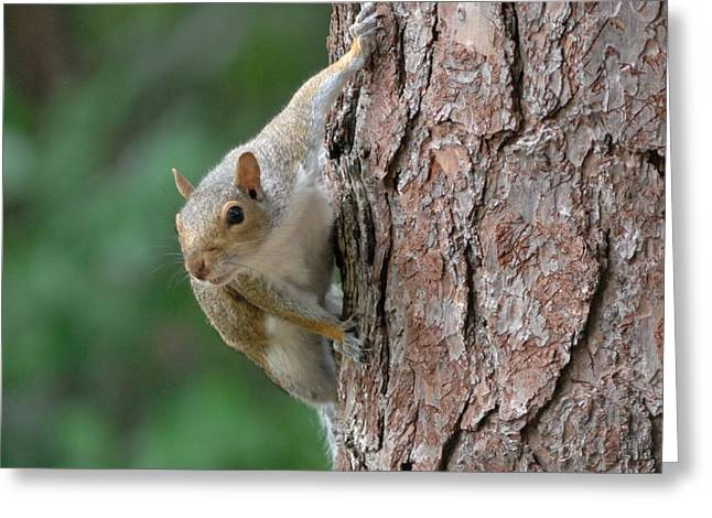 Backyard Squirrel Greeting Card