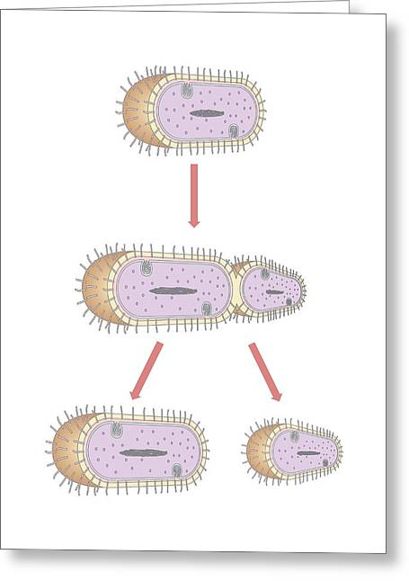 Bacterial Replication, Artwork Greeting Card