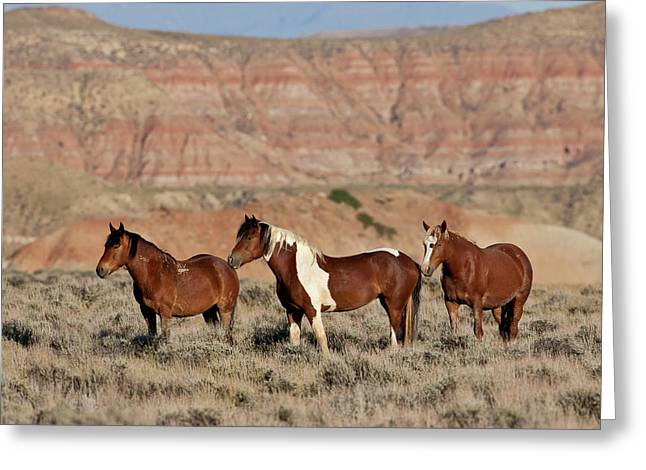 Badland Mustangs Greeting Card