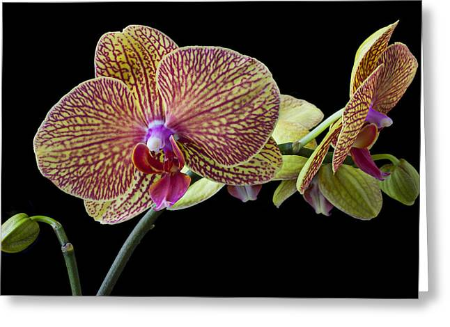 Baeutiful Orchids Greeting Card by Garry Gay