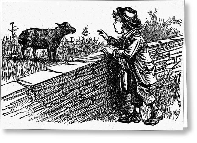 Bah, Bah, Black Sheep Greeting Card