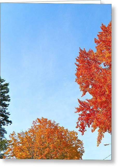 Balance Of Beauty Greeting Card by Randy Rosenberger