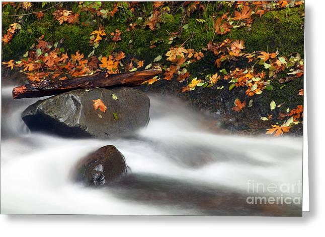 Balance Of The Seasons Greeting Card by Mike  Dawson